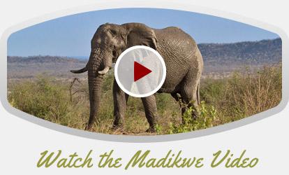 Madikwe-Video
