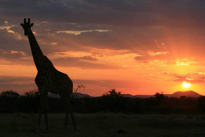 3 Day Madikwe Safaris and Tours - MoAfrika Tours