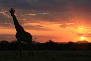 news-sunset