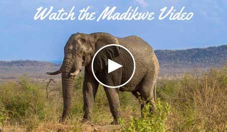 Madikwe Video